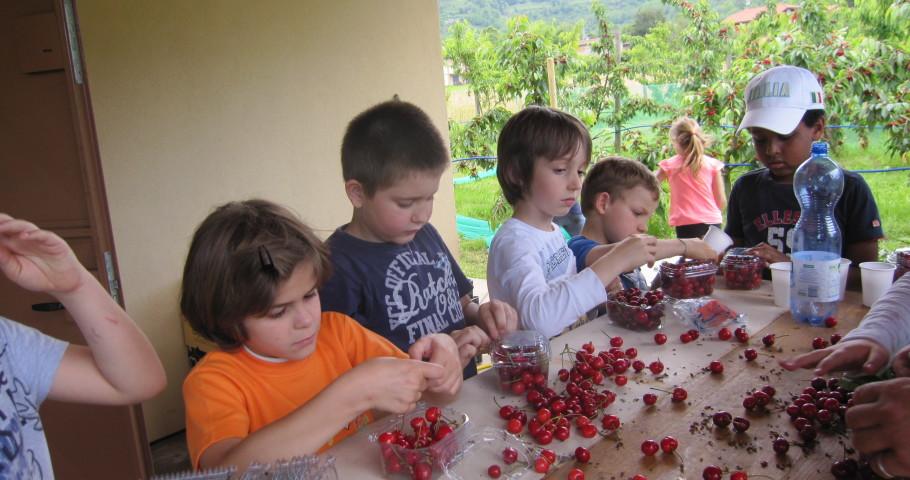 5 ciliegie cavezzali